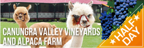 """Canungra Valley Vineyards and Alpaca Farm"